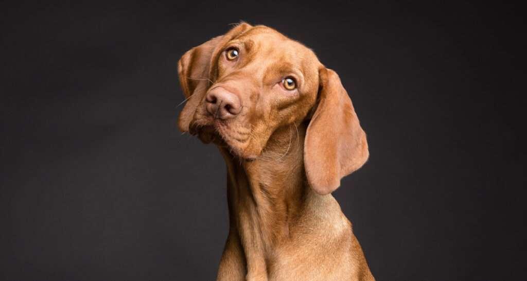 Hjärngodis. Hundar och andra husdjur har bevisad bra effekt på människors välmående och hälsa.